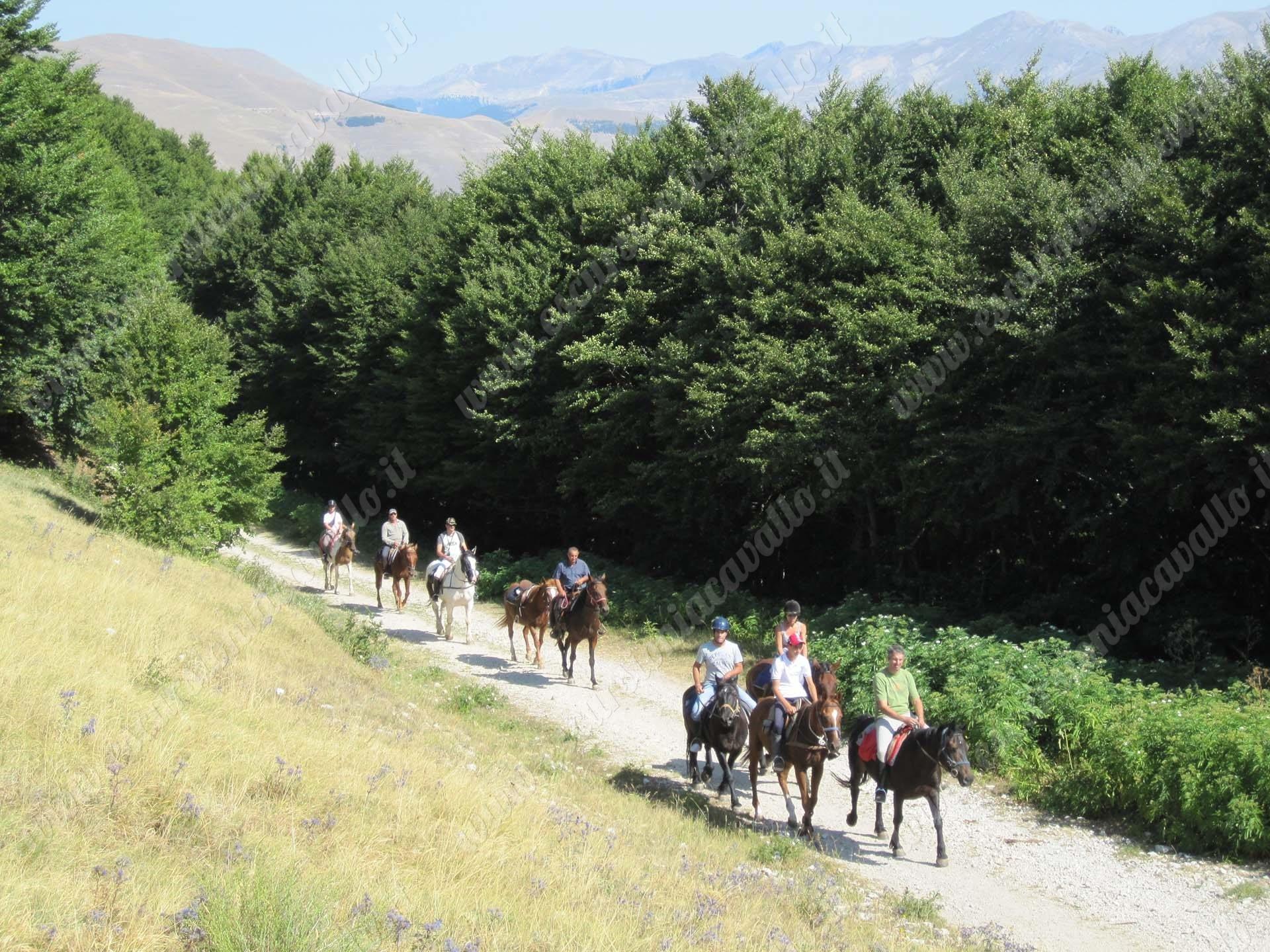 Passeggiate ed escursioni a cavallo personalizzate