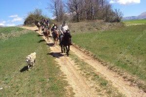 con cane e cavalli passeggiata in sentiero di montagna