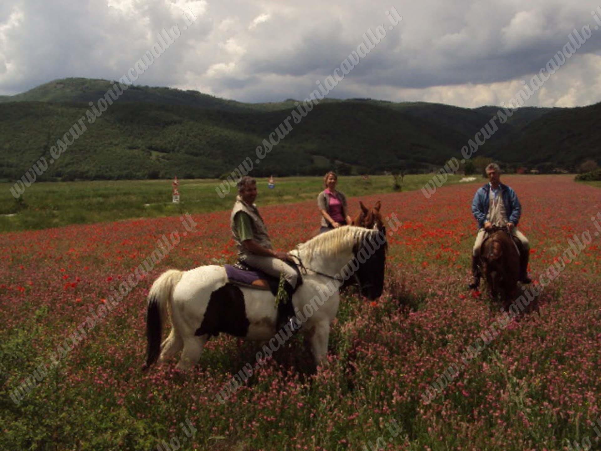 passeggiate a cavallo sulla fioritura di norcia