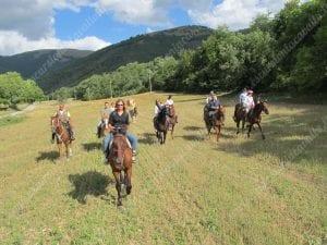 prati e cavalli