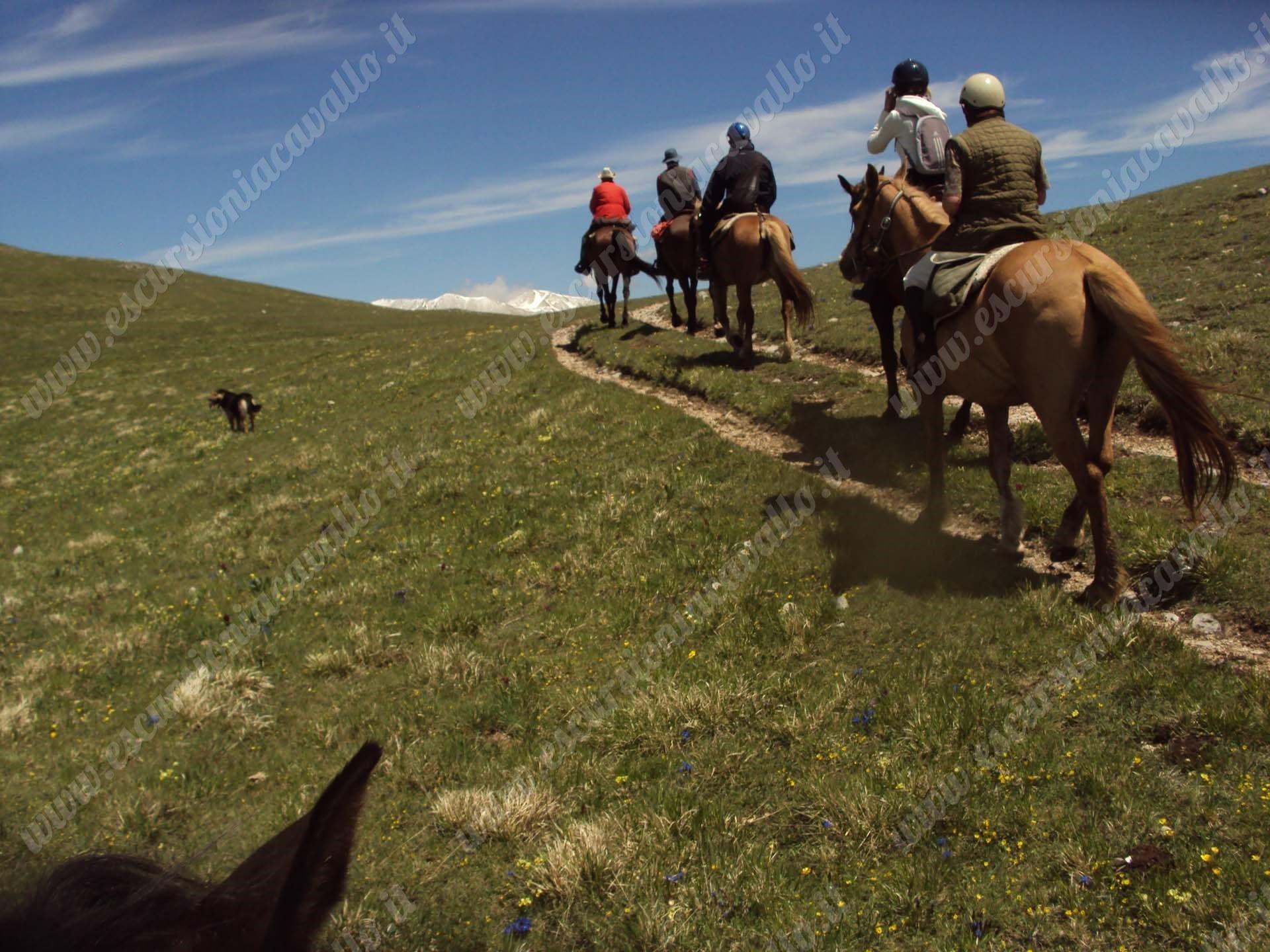 Escursioni sicure in montagna con guida equestre
