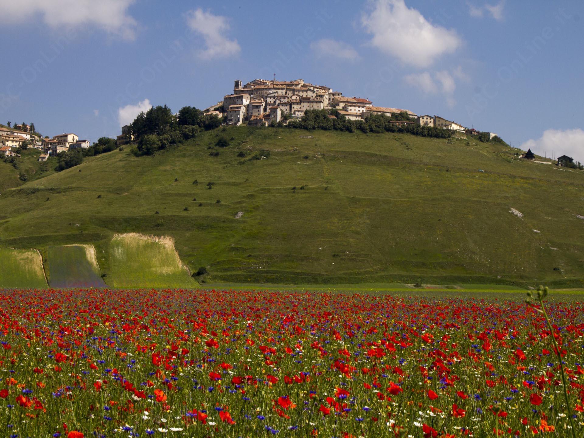 Trekking a Castelluccio di Norcia a cavallo